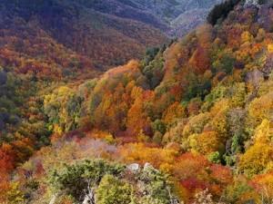 Dalla-strada-panoramica-del-pratomagno-verso-La-Trappola-614x408