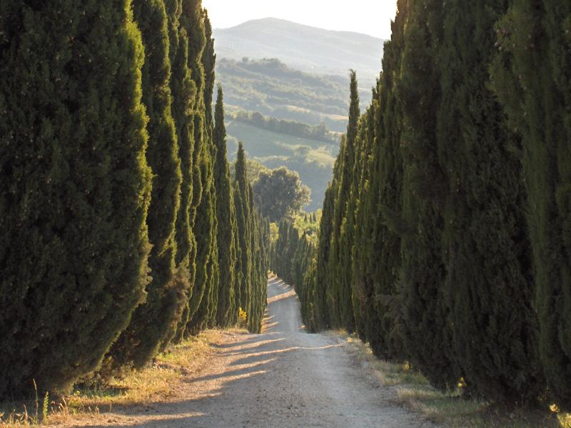 Una tipica strada bianca toscana